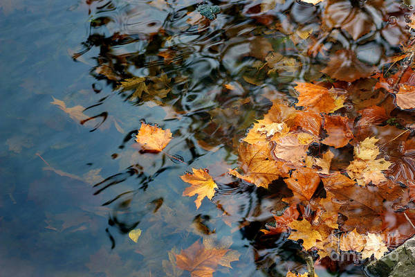Photograph - Fall Leaves In Lake by Karen Adams