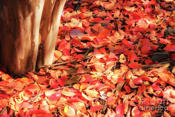 Photograph - Fall Leaves by Jill Lang