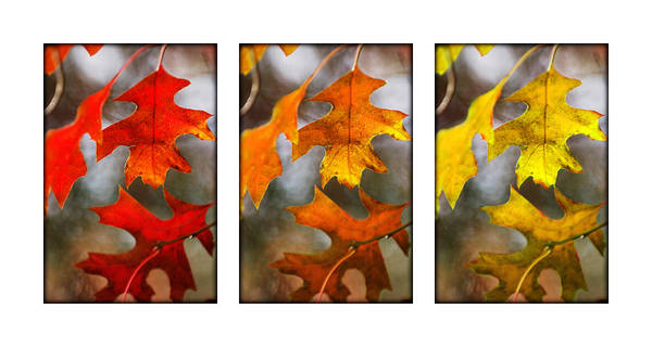 Photograph - Fall Leaves by Jill Reger
