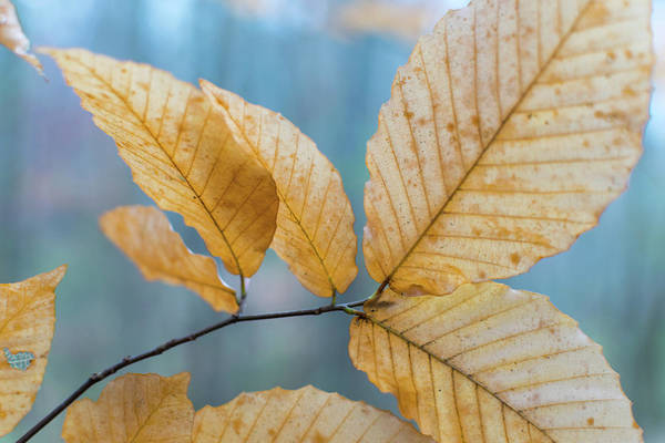 Photograph - Fall Leaves by Keith Smith