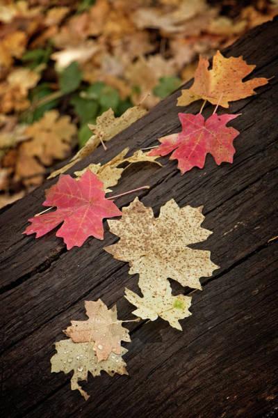 Photograph - Fall Leaves On A Fallen Log by Teresa Wilson