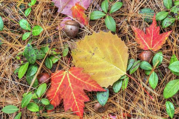 Photograph - Fall Leaves by Paul Schultz