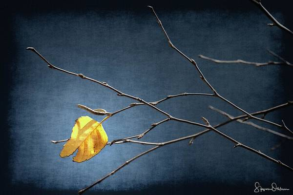 Single Leaf Mixed Media - Fall Leaves Study 2 - Last Leaf - Signed Limited Edition by Steve Ohlsen