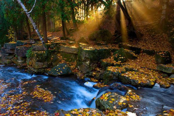 Photograph - Fall Light Shafts by David Heilman