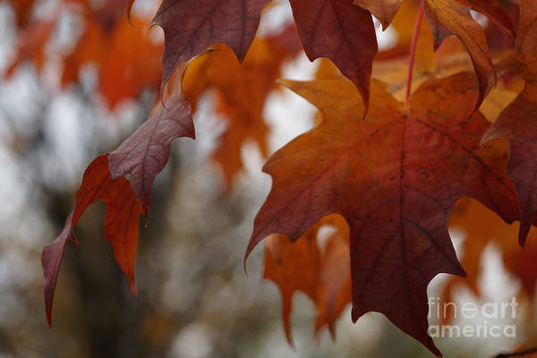 Photograph - Fall by Linda Shafer