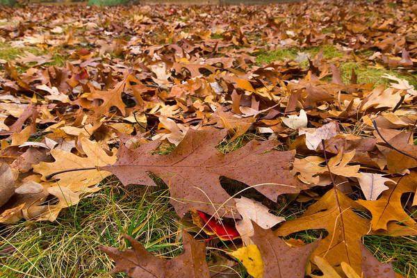 Photograph - Fall by Lora Lee Chapman
