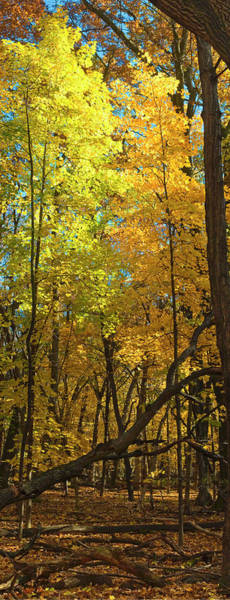 Photograph - Fall Maples- Uw Arboretum  - Madison - Wisconsin by Steven Ralser