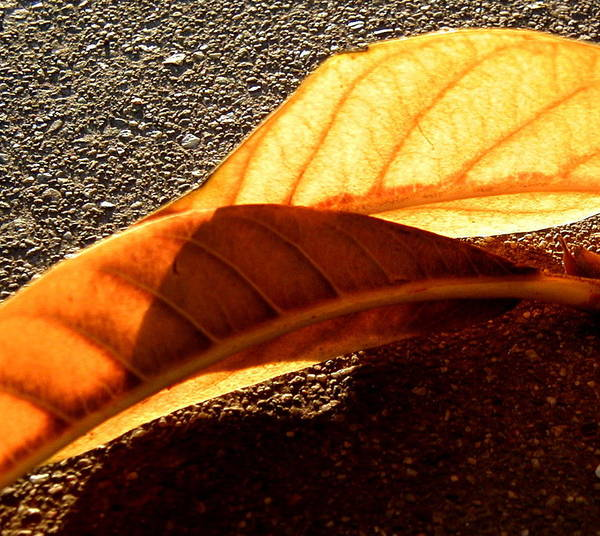 Wall Art - Photograph - Fall by Mark Stevenson