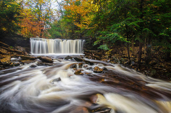Photograph - Fall Mixer by Neil Shapiro