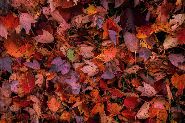 Photograph - Fall Mosaic II by Rima Biswas
