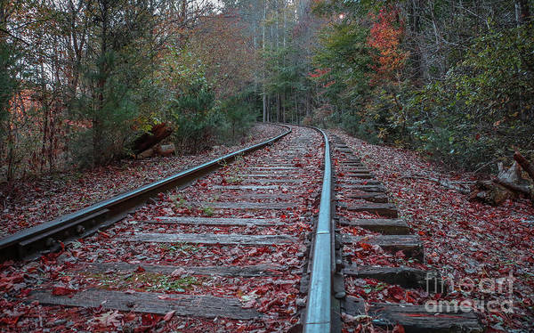 Photograph - Fall Mountain Tracks by Tom Claud