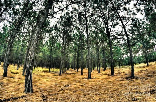 Pine Needles Painting - Fall Needle Drop Ap by Dan Carmichael