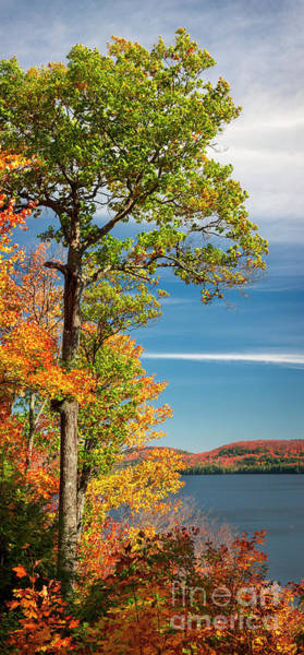 Wall Art - Photograph - Fall Oak Tree by Elena Elisseeva