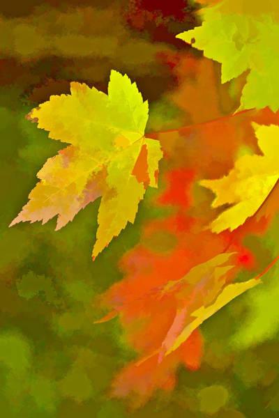 Chs Digital Art - Fall Of Leaf by Ches Black