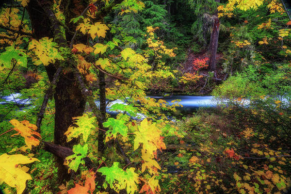 Wall Art - Photograph - Fall On The Deschutes by Cat Connor