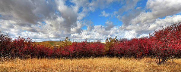 Photograph - Fall On The Palouse Hills by David Patterson