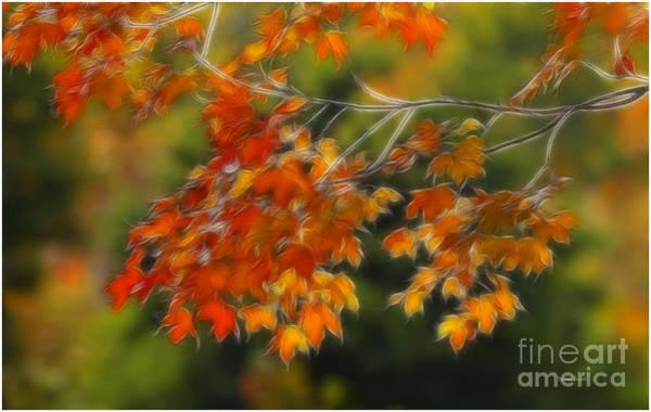 Mixed Media - Fall Orange by Deborah Benoit