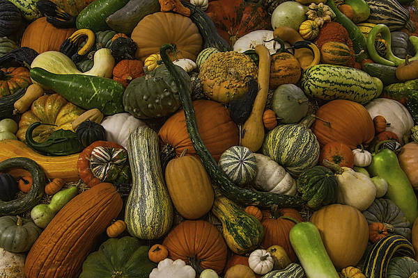 Gourd Photograph - Fall Pile by Garry Gay