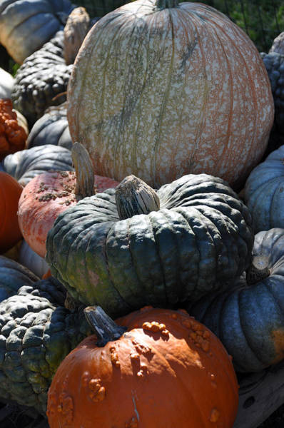 Photograph - Fall Plenty by Teresa Blanton