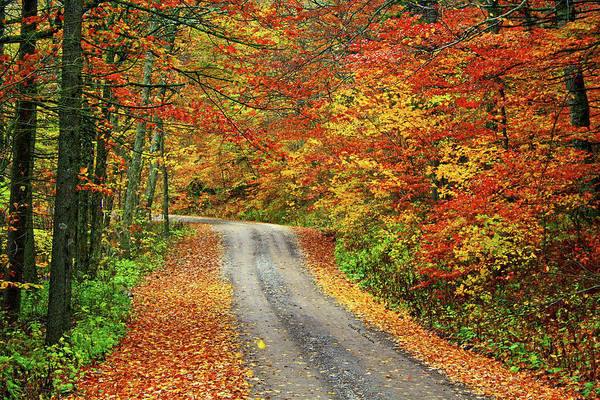Photograph - Fall Postcard by Dale R Carlson