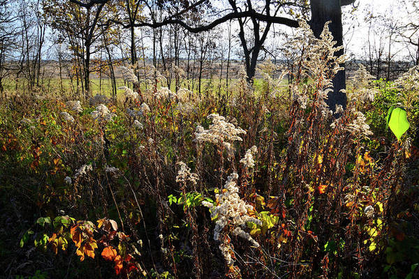 Photograph - Fall Prairie In Glacial Park by Ray Mathis