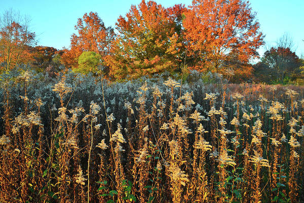 Photograph - Fall Prairie In Moraine Hills by Ray Mathis