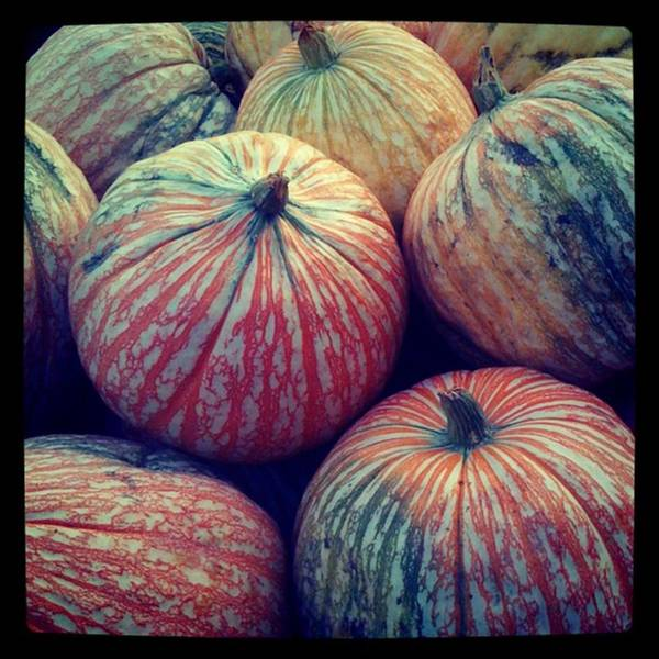 Photograph - #fall #pumpkins by Patricia And Craig