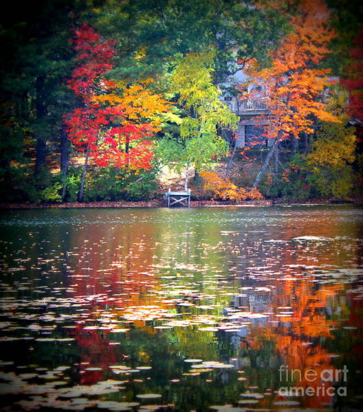 Wall Art - Photograph - Fall Radiance by Hanni Stoklosa