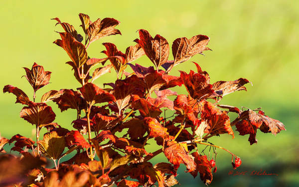 Photograph - Fall Reds by Edward Peterson