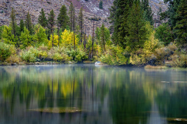 Photograph - Fall Reflected by Cat Connor