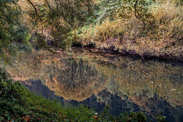 Photograph - Fall Reflections 1 by Bill Posner