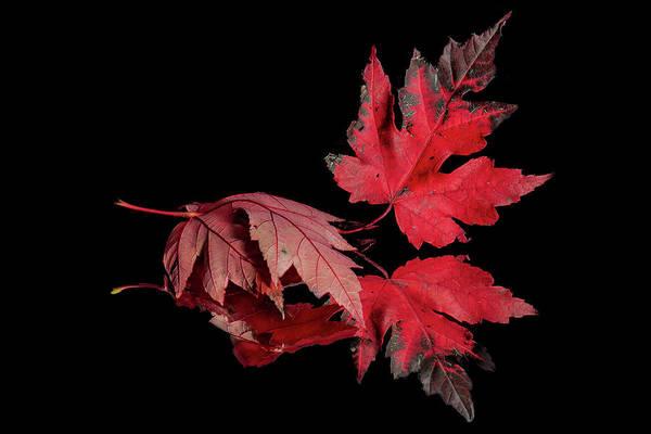 Photograph - Fall Reflections by Allin Sorenson