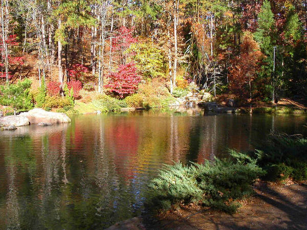 Photograph - Fall Reflections by Anne Cameron Cutri