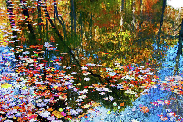 Photograph - Fall Reflections by Dale R Carlson