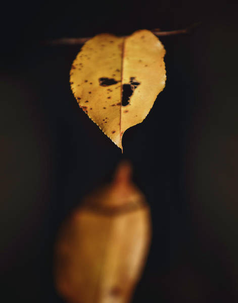 Wall Art - Photograph - Fall Reflections by Eduard Moldoveanu