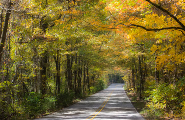 Photograph - Fall Road At Oak Mountain by Parker Cunningham
