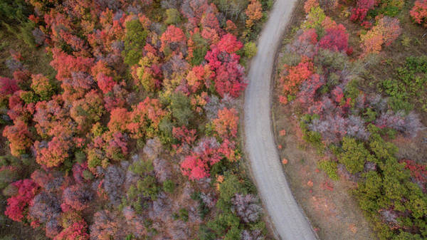 Photograph - Fall Road by Wesley Aston