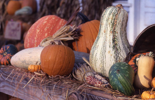 Photograph - Fall-roadside-produce by Curtis J Neeley Jr