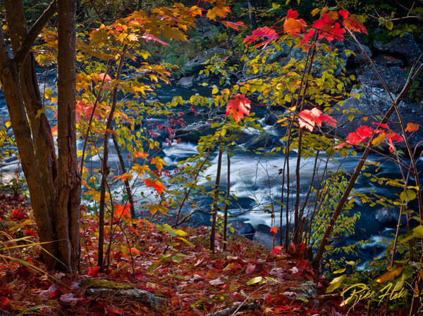 Photograph - Fall - Streamside,  by Rikk Flohr