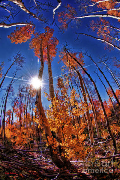 Photograph - Fall Sun And Trees by Blake Richards