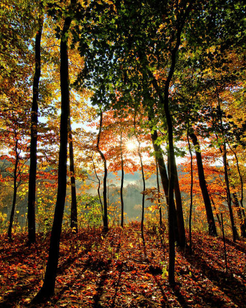 Brian Wilson Wall Art - Photograph - Fall Sunrise by Brian Wilson