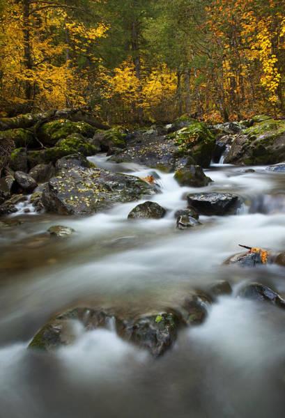 Autumn Leaves Photograph - Fall Surge by Mike  Dawson
