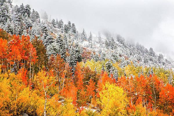 Fall To Winter Canvas Print, Photographic Print, Art Print, Framed Print, Greeting Card, Iphone Case Art Print