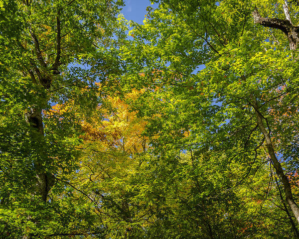 Photograph - Fall Trail by Jack R Perry