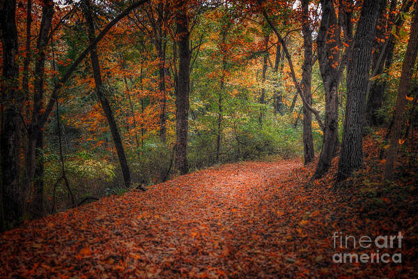 Photograph - Fall Trail by Larry McMahon