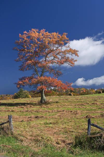 Fall Tree Art Print