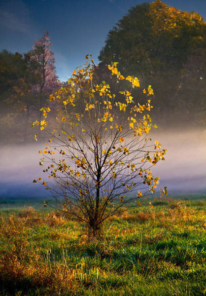 Photograph - Fall Tree by Phil Koch