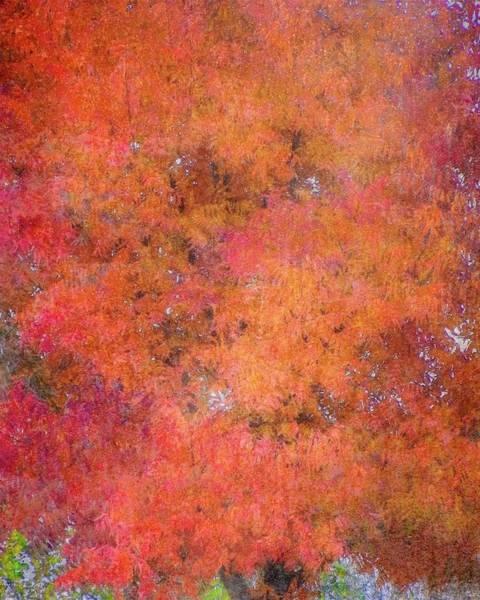 Photograph - Fall Tree Tapestry by Flying Z Photography by Zayne Diamond