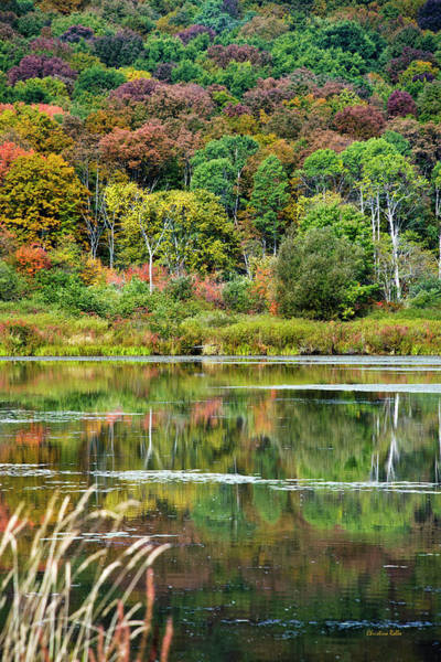 Photograph - Fall Trees by Christina Rollo