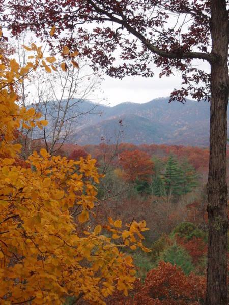 Photograph - Fall Window by Allen Nice-Webb